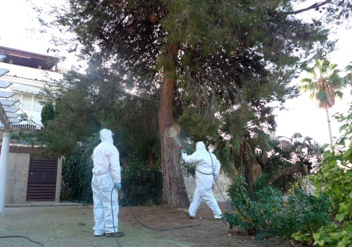 """Imma Orozco: """"L'EPDM està realitzant des de principis d'any exhaustius tractaments contra la processionària dels pins"""""""