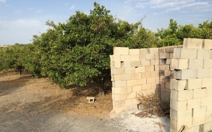 Fins al 15 d'octubre es poden sol·licitar les ajudes per incentivar el triturat de restes de poda de cítrics