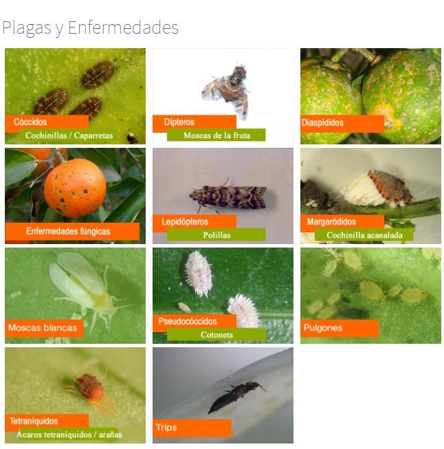 """Agricultura anuncia el curs """"Gestió integrada de plagues"""""""