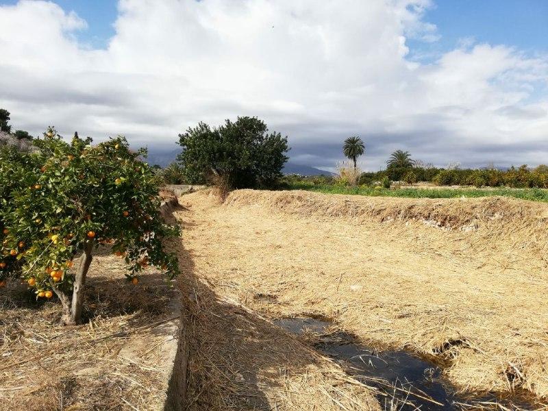 Terminan los trabajos de limpieza del Barranc dels Arcs