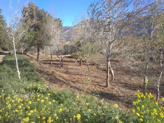 Medi Ambient posa en marxa un pla de manteniment per al riu Algar