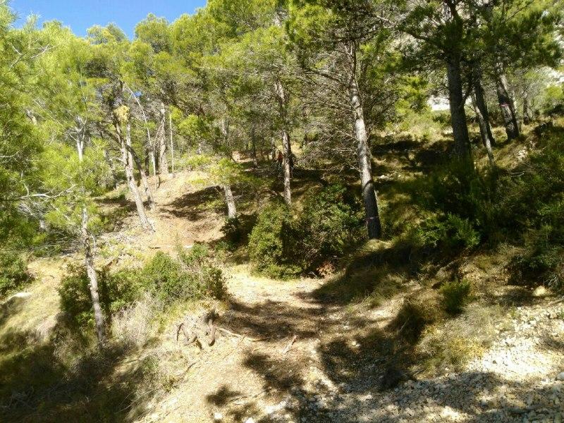 Altea aconsegueix més de 50.000€ per destinar als seus recursos forestals