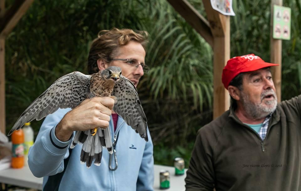 Un total de 32 aus van ser anellades durant la jornada del Dia Mundial de les Aus