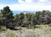 Finalitzen els treballs de millora de les masses forestals i del medi ambient a Serra Bèrnia