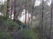 L'execució dels treballs de millora de les masses forestals i del medi ambient a la Serra de Bèrnia comença a donar resultats