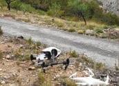 Altea contara con servicio de drones para la prevención de incendios forestales