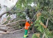 La PDM ha treballat amb rapidesa per restablir la normalitat a Altea després del temporal