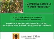 Altea pone en marcha una campaña informativa contra la ''Xylella fastidiosa''