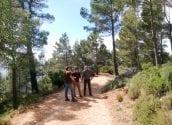 Nous treballs de millora de la massa forestal a Serra Bèrnia