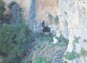 Localitzat un niu d'àguila cuabarrada amb tres cries a la Serra de Bèrnia