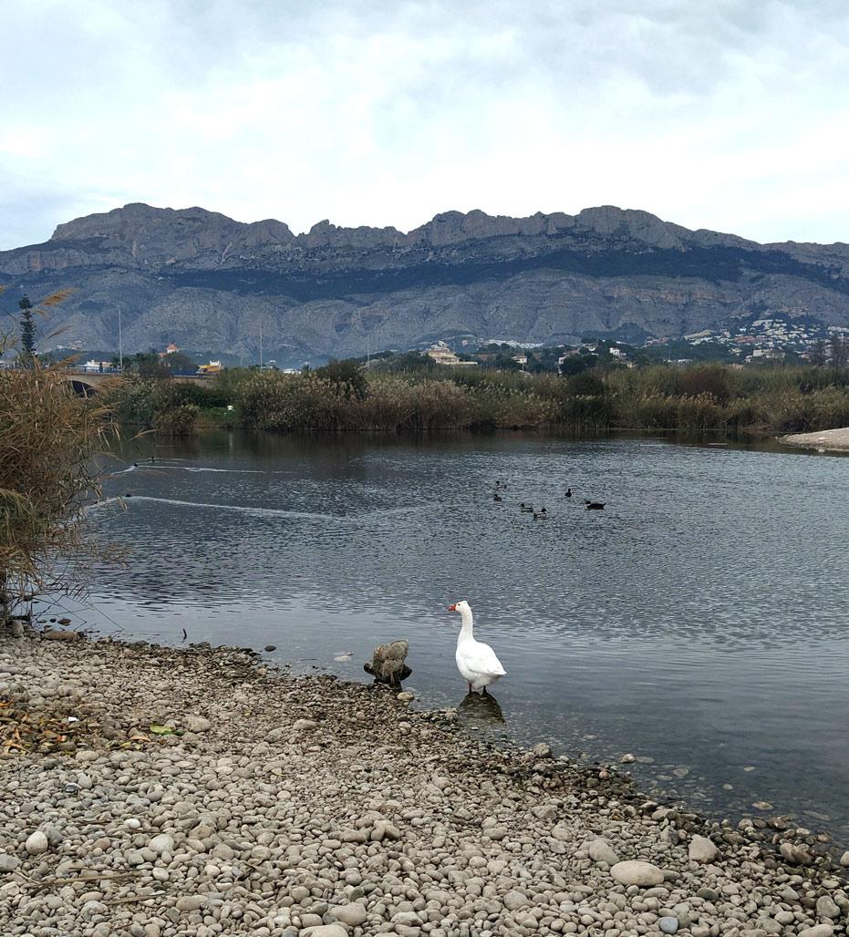El Ayuntamiento continúa invirtiendo en el Plan de Mantenimiento de la desembocadura del río Algar y evaluando su estado ecológico