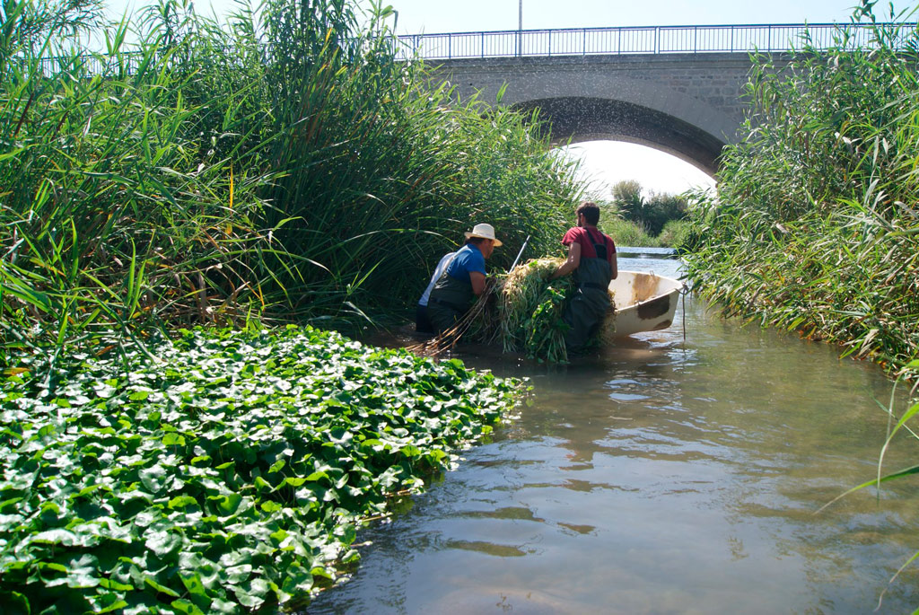 Medi Ambient controla la proliferació de les espècies aquàtiques invasores a la desembocadura de l'Algar