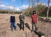 Comença la plantació d'espècies de ribera que la Conselleria de Transició Ecològica està duent a terme al riu Algar