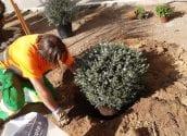 La Pública millora els jardins perquè Altea oferisca la seua millor imatge