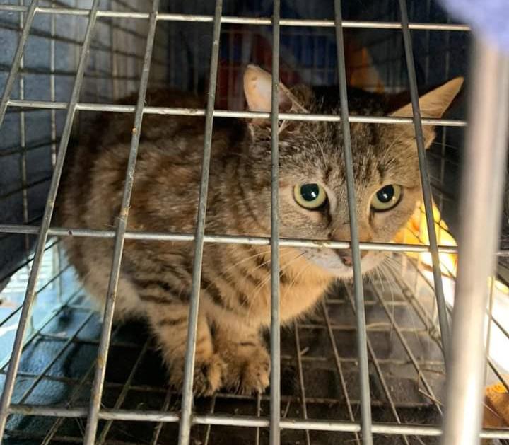 Benestar Animal i les Associacions de Protecció d'Altea organitzen la primera jornada formativa sobre la gestió de les colònies felines d'Altea