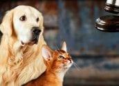 Altea s'actualitza en Dret Animal