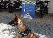 La Policía Local de Altea estrena unidad canina