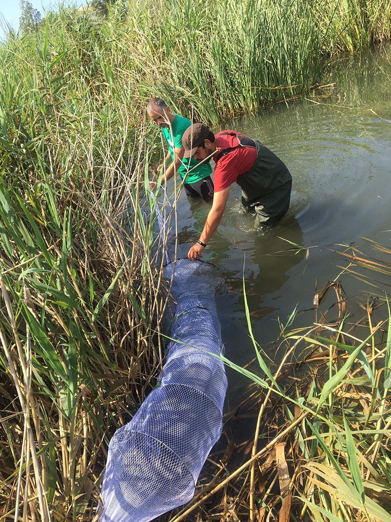 Medio Ambiente lleva a cabo una campaña de control de la tortuga de Florida en la desembocadura del río Algar